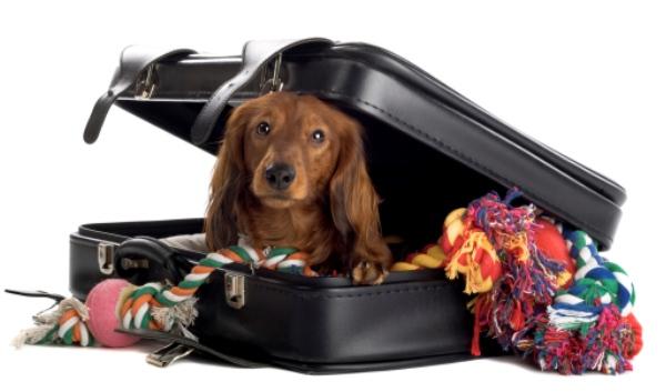 Foto de Consejos para viajar con tu mascota